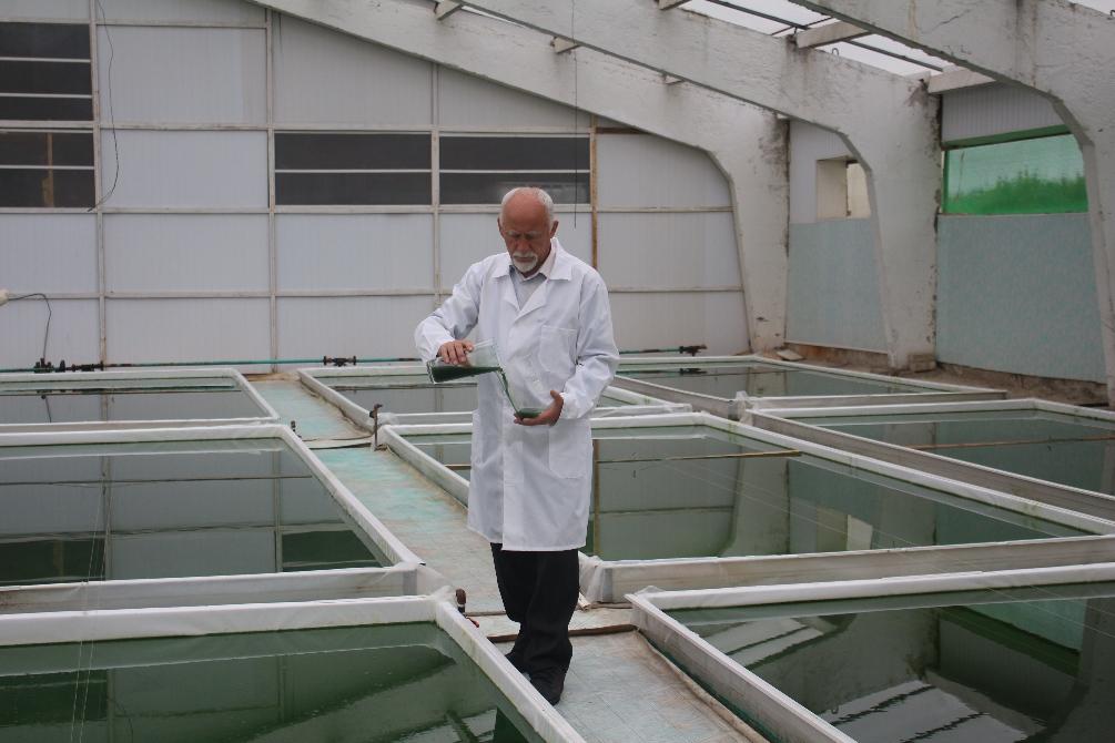 Выращивания водорослей 57